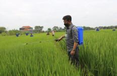 Gerakan Padat Karya, Terobosan Syahrul Yasin Limpo Memperkuat Perekonomian - JPNN.com
