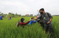Perkuat Perekonomian, Kementan Gerakkan Padat Karya di Karanganyar - JPNN.com