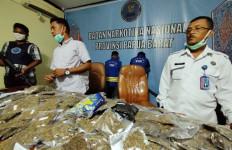 BNNP Papua Barat Sikat Dua Kurir Penyelundup 6 Kg Ganja - JPNN.com