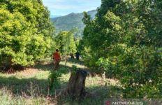 Hari Kelima, Basarnas Libatkan 60 Orang Cari Lansia yang Hilang di Hutan Kolaka - JPNN.com
