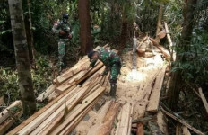 Patroli Menelusuri Hutan Perbatasan, Satgas Pamtas Yonif 642/Kps Temukan Kayu Hasil Pembalakan Liar - JPNN.com