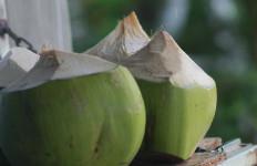 Rutin Minum Air Kelapa, 4 Penyakit Ini Langsung Kabur - JPNN.com