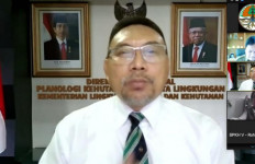 KLHK Hentikan Izin Hutan Alam Primer dan Lahan Gambut Capai 66,18 Juta Hektar - JPNN.com