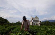 Petani Untung Besar, Usman: 1 Petak Lahan Tomat, Saya dapat Rp20 Juta - JPNN.com