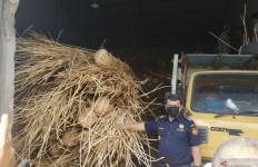 Bea Cukai Menggagalkan Upaya Penyelundupan 100 Ton Rotan ke Malaysia - JPNN.com