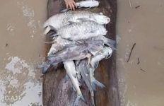 Deddy Sitorus Desak Penegak Hukum Tindak Perusahaan Pencemar Sungai Malinau - JPNN.com