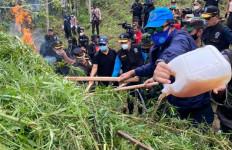 BNN Musnahkan 9 Hektare Ladang Ganja di Ujung Sumatera - JPNN.com