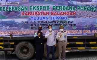 Bea Cukai Fasilitasi Ekspor Umbi Porang Kalimantan ke Jepang