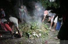 Selamat dari Serangan KKB, Suku Dambet Gelar Ritual Bakar Batu - JPNN.com