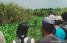 Detik-detik Umar Bahuri Hilang Diseret Buaya ke Saluran Irigasi - JPNN.com