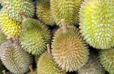 Apakah Ada Efek Samping Konsumsi Durian dengan Manggis? - JPNN.com
