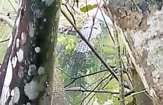 Heboh Buaya 3 Meter Muncul Lagi - JPNN.com