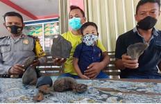 8 Batu Mengandung Emas Jatuh di Kebun Milik Robi Tamar - JPNN.com