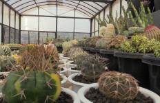 Lepas Karier di Dunia Migas demi Kaktus, Aldy Ridwan Meraup Ratusan Juta per Bulan - JPNN.com