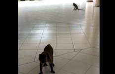 Monyet Serbu Kampus IPB - JPNN.com