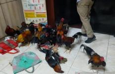 Kukuruyuk, Judi Sabung Ayam Digerebek, Lihat Tuh Barang Buktinya - JPNN.com