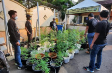 Polisi Gerebek Rumah di Brebes, Ratusan Pot Ganja Diamankan - JPNN.com