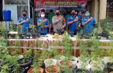 4 Warga Brebes Tanam 200 Pohon Ganja di Dalam Rumah, Polisi Heran Mendengar Motif Mereka - JPNN.com