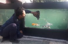 Balai Wyata Guna Bandung Berdayakan Disabilitas dengan Pelatihan Budi Daya Ikan Koi - JPNN.com