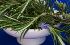3 Manfaat Sehat Tanaman Rosemary, Selain Penambah Aroma Makanan - JPNN.com