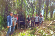 Beruang Madu Teror Warga Pasbar, Soron Berdarah-darah - JPNN.com