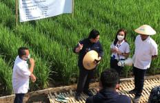 Ikhtiar Kedaulatan Pangan Nasional, Menteri BUMN Kunjungi Lokasi Program Petani Berdaya MAI Foundation - JPNN.com