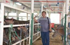Johan DPR Desak Pemerintah Sejahterakan Peternak Dalam Negeri - JPNN.com