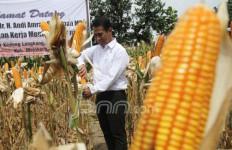 Kembangkan Jagung di Wilayah Perbatasan, FAO Siap Bersinergi Dengan Kementan - JPNN.com