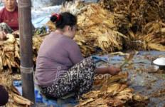 Pemerintah Sebaiknya Fokus pada Pemulihan Ekonomi Dibanding Sibuk Revisi PP 109/2012 - JPNN.com