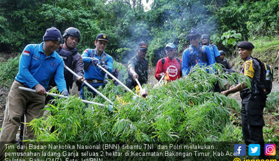 Tim dari Badan Narkotika Nasional (BNN) dibantu TNI dan Polri melakukan pemusnahan ladang Ganja seluas 2 hektar di Kecamatan Bakongan Timur, Kab Aceh Selatan, Rabu (24/7). Foto: Ist/BNN - JPNN.com