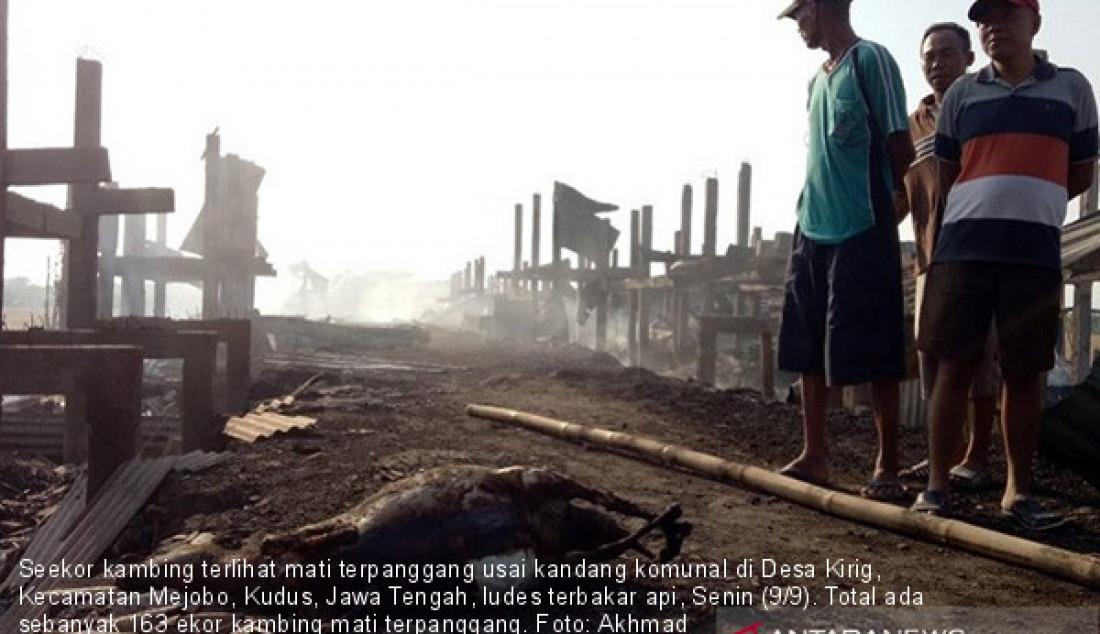 Seekor kambing terlihat mati terpanggang usai kandang komunal di Desa Kirig, Kecamatan Mejobo, Kudus, Jawa Tengah, ludes terbakar api, Senin (9/9). Total ada sebanyak 163 ekor kambing mati terpanggang. Foto: Akhmad Nazaruddin/ANTARA/JPNN.com - JPNN.com