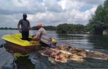 Polisi Selidiki Temuan Bangkai Babi di Danau Siombak - JPNN.com