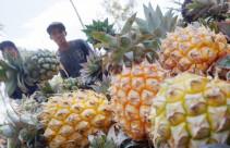 Indonesia Wacanakan Ekspor Nanas ke Amerika - JPNN.com