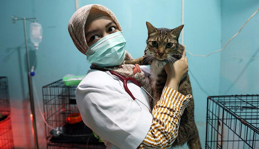 Dokter memeriksa kesehatan kucing di Vetopet Animal Clinic, Cibinong, Bogor, Jumat (15/5). Jasa penitipan hewan di klinik mengalami penurunan jelang Lebaran akibat himbauan larangan mudik di saat pandemi COVID-19. Foto: Ricardo - JPNN.com