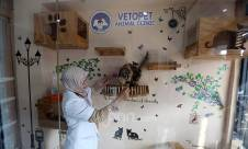 Vetopet Animal Clinic - JPNN.com