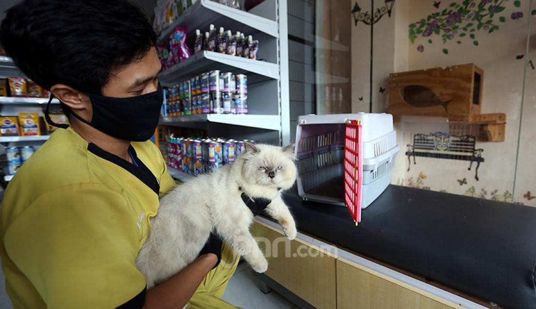 Perawat hewan memeriksa kesehatan kucing di Vetopet Animal Clinic, Cibinong, Bogor, Jumat (15/5). Jasa penitipan hewan di klinik mengalami penurunan jelang Lebaran akibat himbauan larangan mudik di saat pandemi COVID-19. Foto: Ricardo - JPNN.com