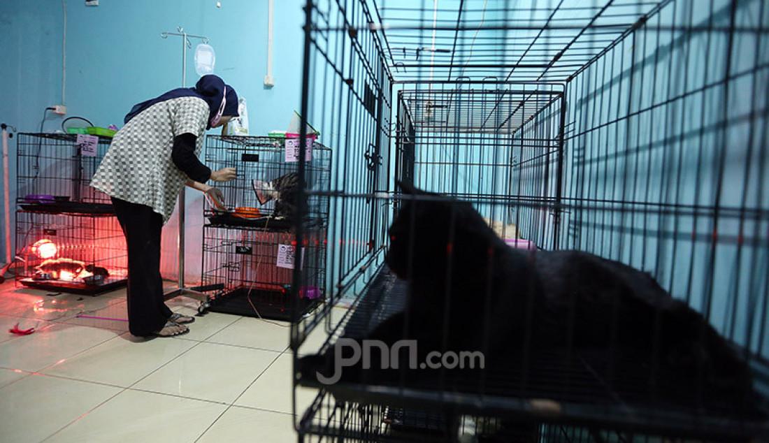 Dokter bersama perawat hewan memeriksa kesehatan kucing di Vetopet Animal Clinic, Cibinong, Bogor, Jumat (15/5). Jasa penitipan hewan di klinik mengalami penurunan jelang Lebaran akibat himbauan larangan mudik di saat pandemi COVID-19. Foto: Ricardo - JPNN.com