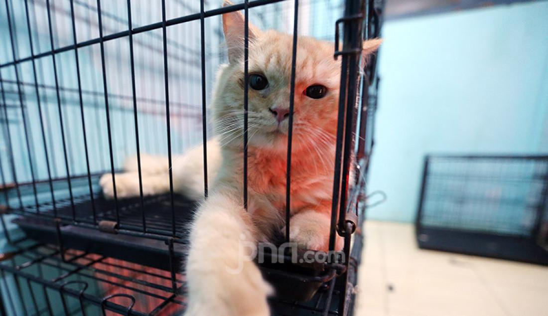 Kucing di Vetopet Animal Clinic, Cibinong, Bogor, Jumat (15/5). Jasa penitipan hewan di klinik mengalami penurunan jelang Lebaran akibat himbauan larangan mudik di saat pandemi COVID-19. Foto: Ricardo - JPNN.com