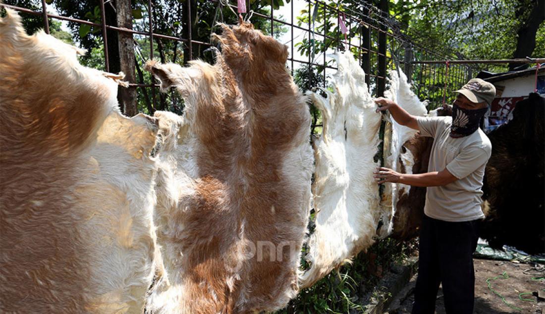 Pedang kulit Bedug saat menata kulit kambing daganganya di Jalan Pemuda, Bogor, Jumat (15/5). Kulit kambing dijual dengan harga Rp 100.000-150.000. Foto: Ricardo - JPNN.com