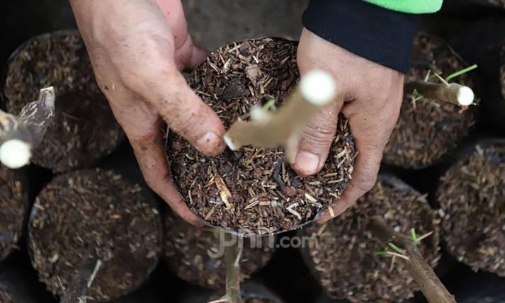 Penuhi Kebutuhan Taman, Pemprov DKI Lakukan Pembibitan - JPNN.com