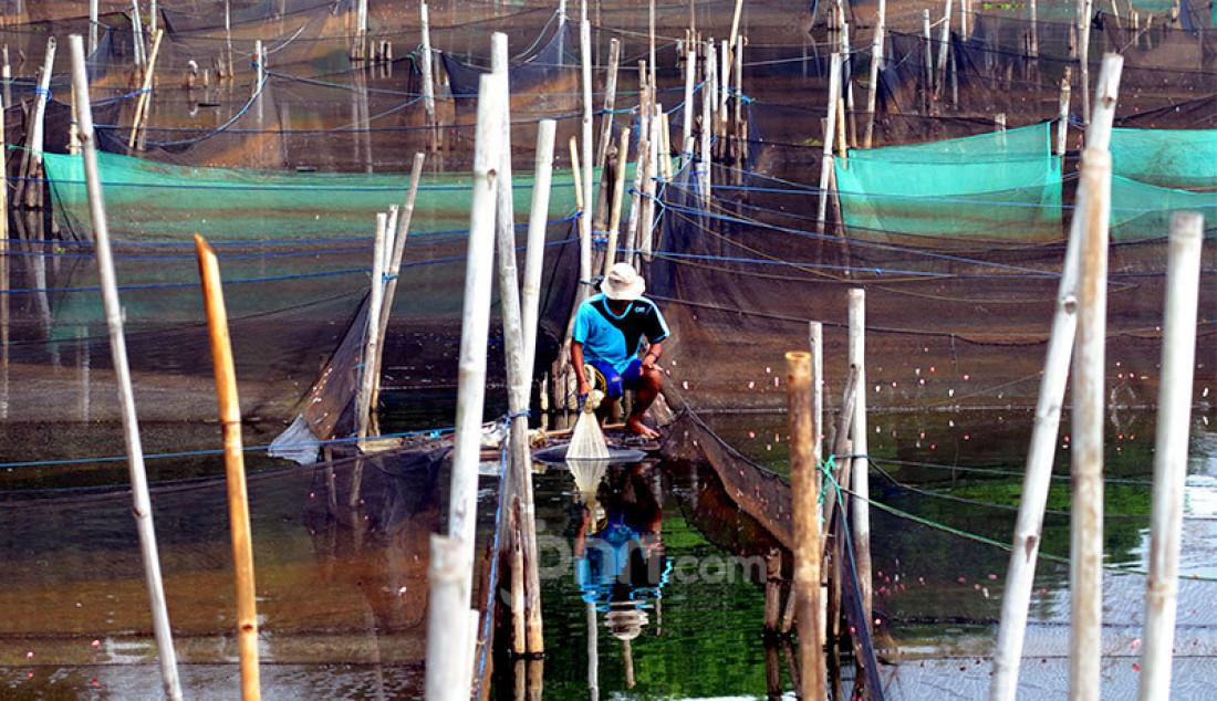 Petani menjala ikan mujair di antara keramba ikan hias di Situ Telaga Biru, Ciseeng, Kabupaten Bogor, Jawa Barat, Rabu (16/9). Sebelum pandemi mereka mampu menghasilkan Rp 5 juta hingga Rp 7 juta, namun kini hanya mendapatkan Rp 500 ribu hingga Rp 700 ribu/bulan. Foto: Ricardo - JPNN.com
