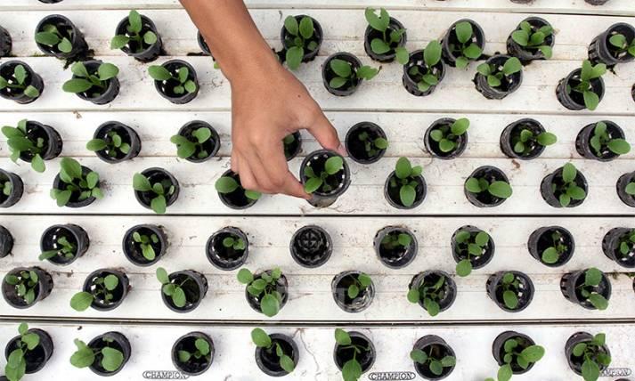 Santri Bertani Kembangkan Tanaman Hidroponik - JPNN.com