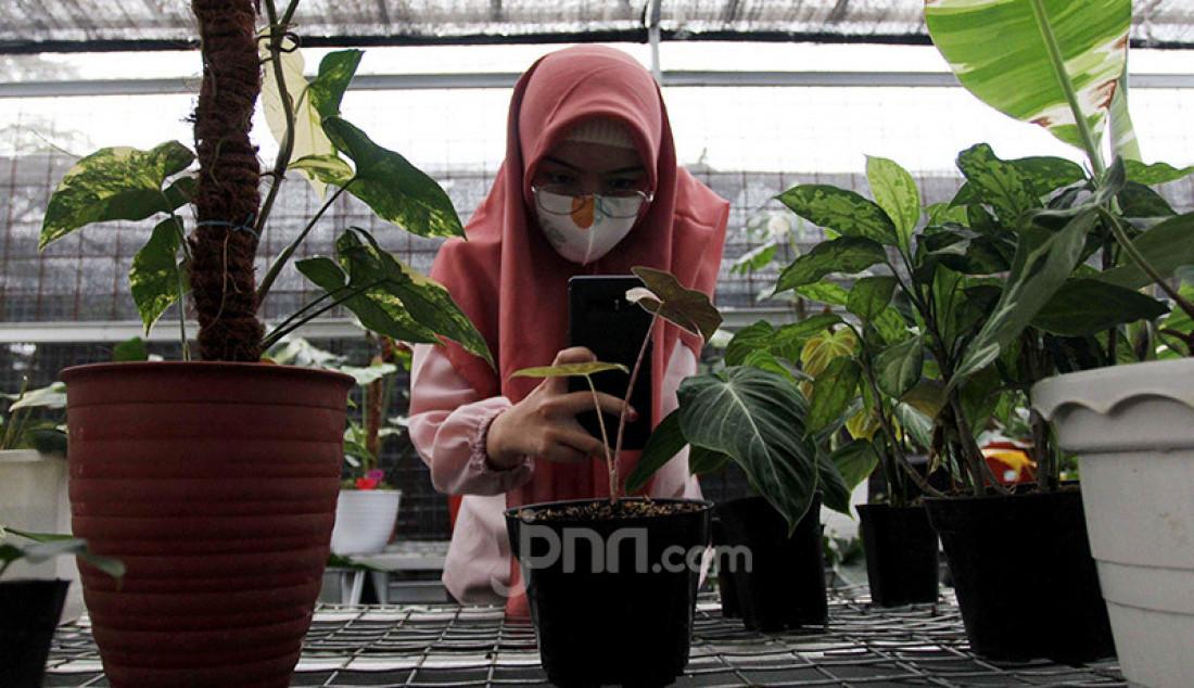 Pedagang tanaman hias di Titik Hijau, Bojongsari, Depok, Jawa Barat memanfaatkan internet untuk pemasaran dan mendongkrak penjualan. Penjualan tanaman hias secara daring meningkat pada masa pandemi Covid-19 dibandingkan pemasaran secara offline. Foto: Ricardo - JPNN.com
