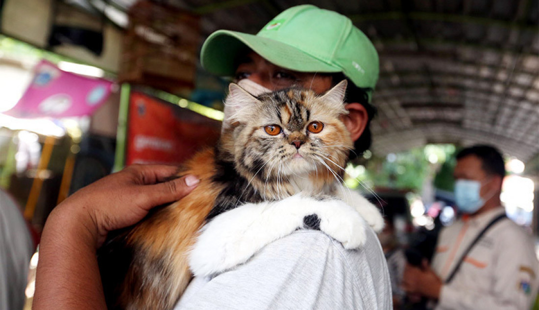 Warga membawa hewan peliharaan miliknya untuk divaksin rabies di Gang Kingkit, Kelurahan Kebon Kelapa, Kecamatan Gambir, Jakarta, Selasa (3/11). Kegiatan vaksinasi itu dilakukan oleh Suku Dinas ketahanan Pangan, Kelautan dan Perikanan (KPKP) Jakarta Pusat untuk mencegah penularan Covid-19. Foto: Ricardo - JPNN.com