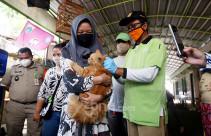 Dinas KPKP Gelar Vaksinasi Rabies Demi Cegah Penularan Covid-19 - JPNN.com