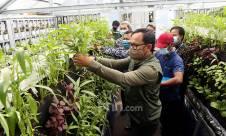 Dorong Sektor Pertanian di Masa Pandemi Melalui Bogor Berkebun - JPNN.com