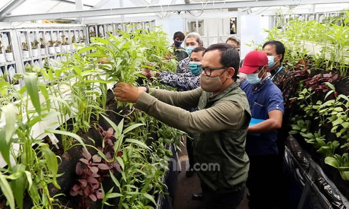 Dorong Sektor Pertanian di Masa Pandemi Melalui Bogor Berkebun