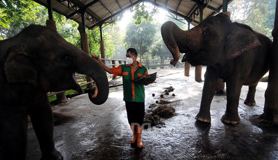 Penjaga kandang di Taman Margasatwa Ragunan (TMR) di Jakarta Selatan memberi makan gajah sumatera, Selasa (23/2). Para pekerja TMR tetap melayani hewan-hewan koleksi meski kebun binatang milik Pemprov DKI itu tak menerima kunjungan wisatawan pada masa pemberlakuan pembatasan kegiatan masyarakat (PPKM). Foto: Ricardo - JPNN.com