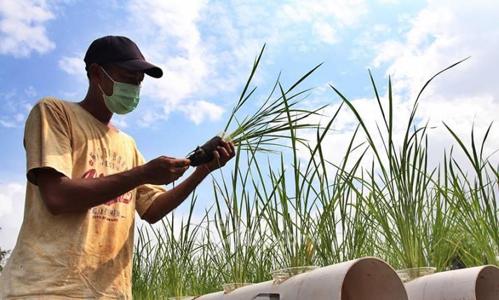 Pertanian Hidroganik demi Perkuat Ketahanan Pangan di Masa Pandemi - JPNN.com